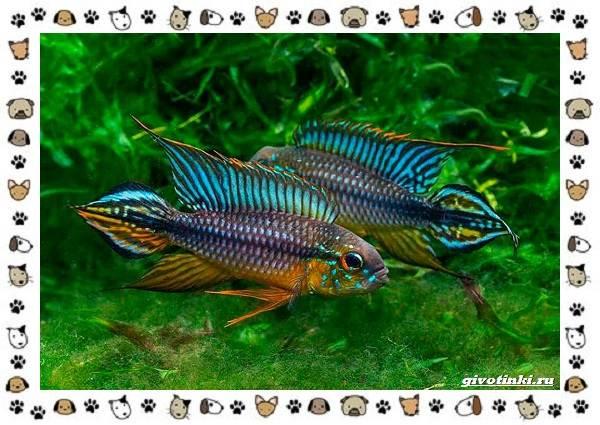 20-самых-красивых-видов-пресноводных-аквариумных-рыб-для-домашнего-содержания-20