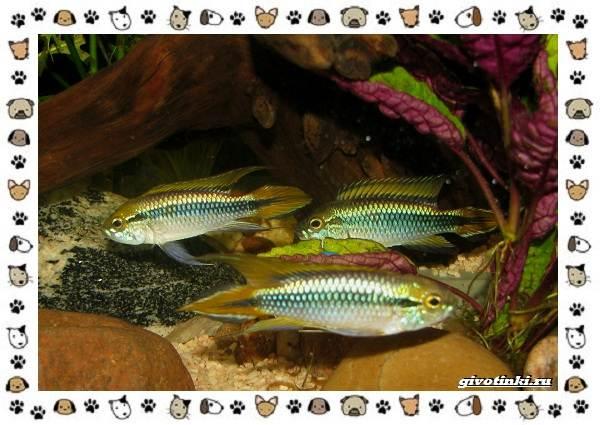 20-самых-красивых-видов-пресноводных-аквариумных-рыб-для-домашнего-содержания-21
