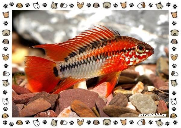20-самых-красивых-видов-пресноводных-аквариумных-рыб-для-домашнего-содержания-22