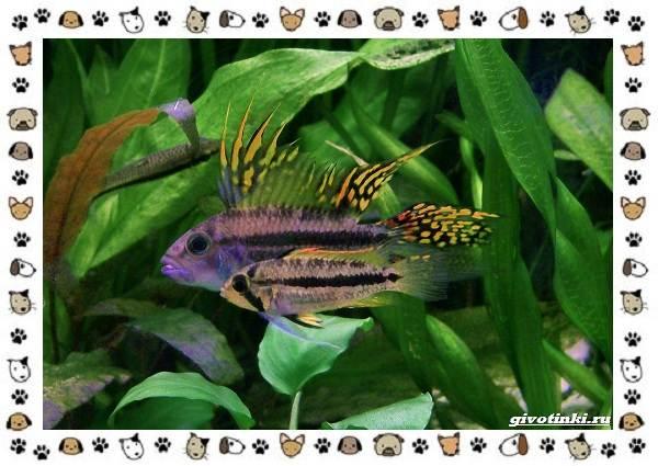 20-самых-красивых-видов-пресноводных-аквариумных-рыб-для-домашнего-содержания-24
