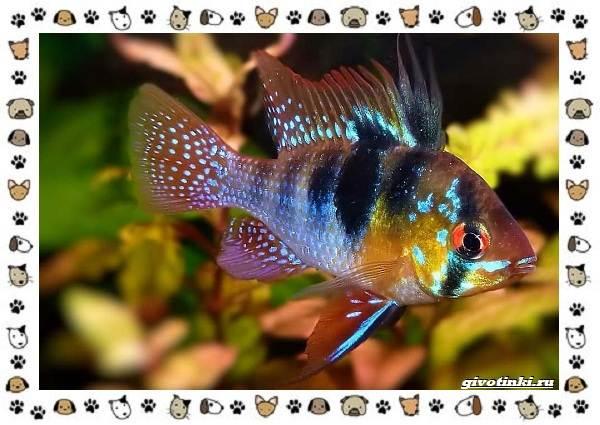 20-самых-красивых-видов-пресноводных-аквариумных-рыб-для-домашнего-содержания-25