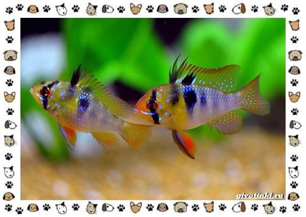 20-самых-красивых-видов-пресноводных-аквариумных-рыб-для-домашнего-содержания-27