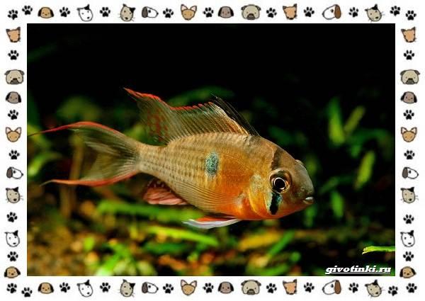 20-самых-красивых-видов-пресноводных-аквариумных-рыб-для-домашнего-содержания-28
