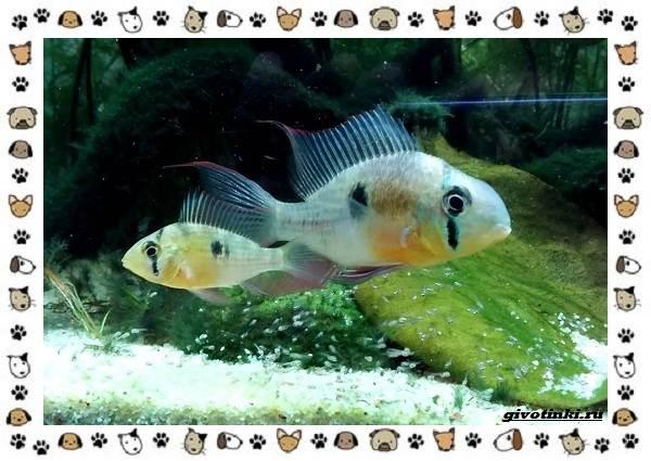 20-самых-красивых-видов-пресноводных-аквариумных-рыб-для-домашнего-содержания-29