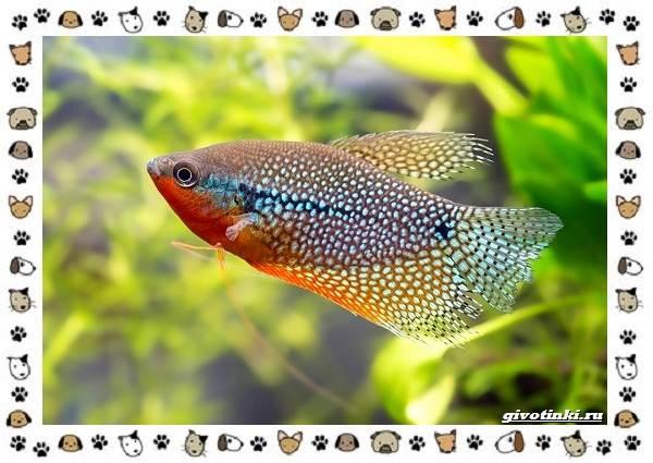 20-самых-красивых-видов-пресноводных-аквариумных-рыб-для-домашнего-содержания-3