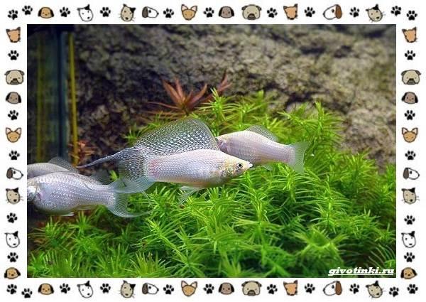 20-самых-красивых-видов-пресноводных-аквариумных-рыб-для-домашнего-содержания-33