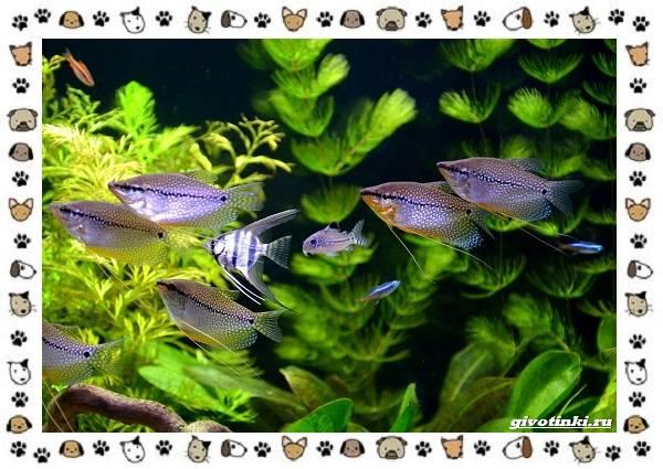 20-самых-красивых-видов-пресноводных-аквариумных-рыб-для-домашнего-содержания-4