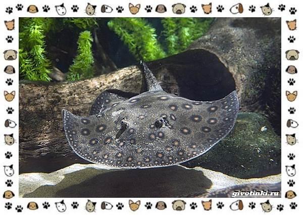 20-самых-красивых-видов-пресноводных-аквариумных-рыб-для-домашнего-содержания-40