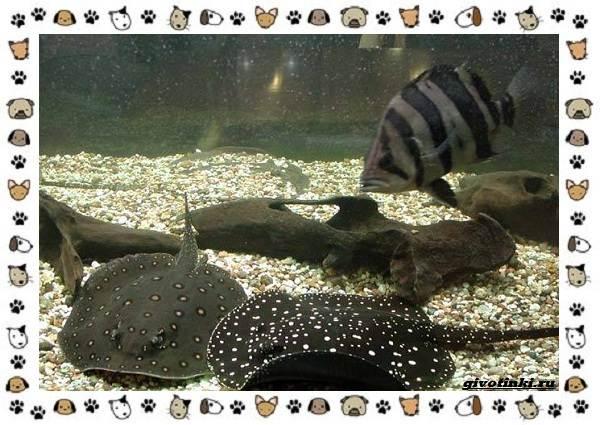 20-самых-красивых-видов-пресноводных-аквариумных-рыб-для-домашнего-содержания-41
