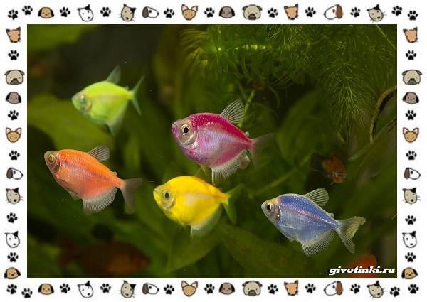 20-самых-красивых-видов-пресноводных-аквариумных-рыб-для-домашнего-содержания-42