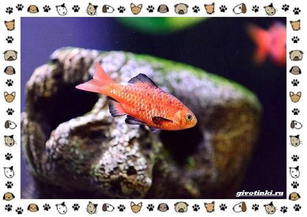 20-самых-красивых-видов-пресноводных-аквариумных-рыб-для-домашнего-содержания-45