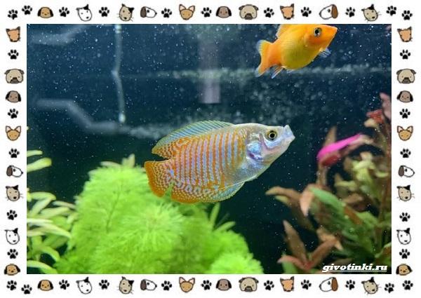 20-самых-красивых-видов-пресноводных-аквариумных-рыб-для-домашнего-содержания-48