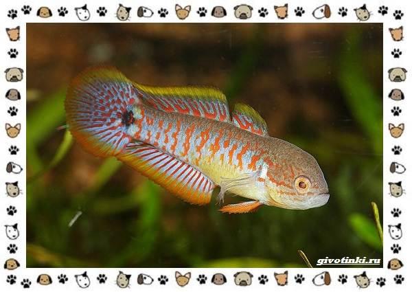 20-самых-красивых-видов-пресноводных-аквариумных-рыб-для-домашнего-содержания-5