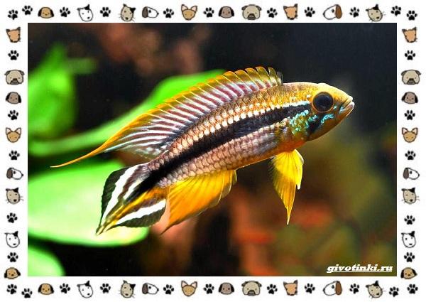 20-самых-красивых-видов-пресноводных-аквариумных-рыб-для-домашнего-содержания-50