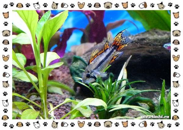 20-самых-красивых-видов-пресноводных-аквариумных-рыб-для-домашнего-содержания-51
