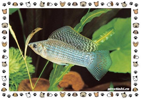 20-самых-красивых-видов-пресноводных-аквариумных-рыб-для-домашнего-содержания-52