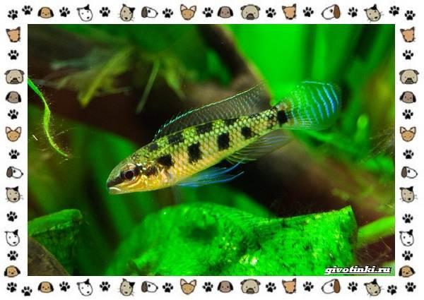 20-самых-красивых-видов-пресноводных-аквариумных-рыб-для-домашнего-содержания-7