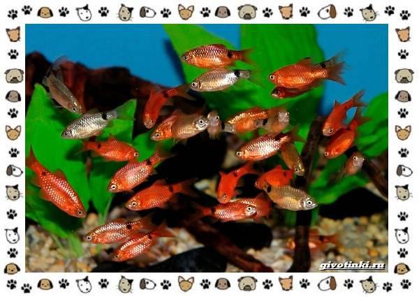 20-самых-красивых-видов-пресноводных-аквариумных-рыб-для-домашнего-содержания-8