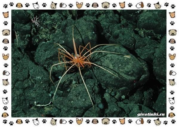 Морской-паук-совсем-не-паукообразное-1