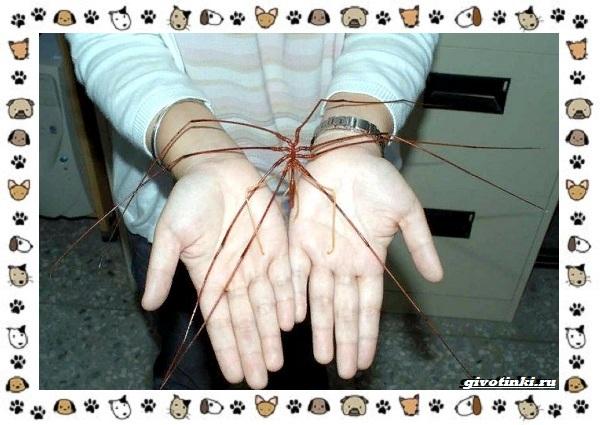 Морской-паук-совсем-не-паукообразное-15