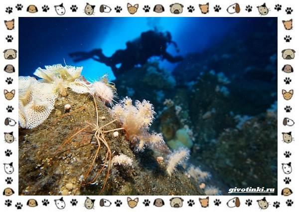 Морской-паук-совсем-не-паукообразное-8