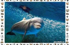 Виды дельфинов: названия, описание и среда обитания
