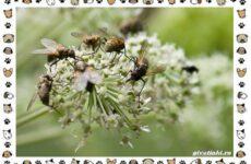 Виды мух: о простых существах в сложных деталях