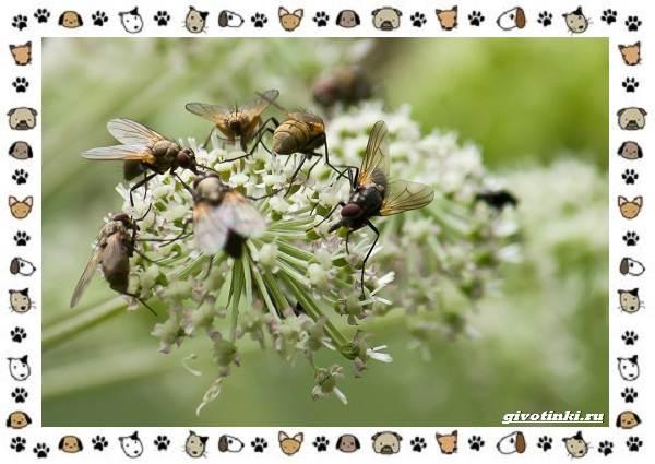 Виды-мух-о-простых-существах-в-сложных-деталях-1