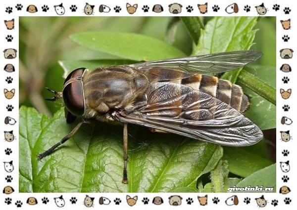 Виды-мух-о-простых-существах-в-сложных-деталях-10