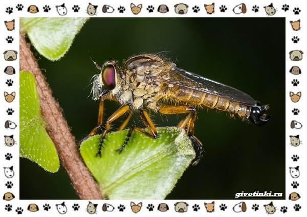 Виды-мух-о-простых-существах-в-сложных-деталях-12