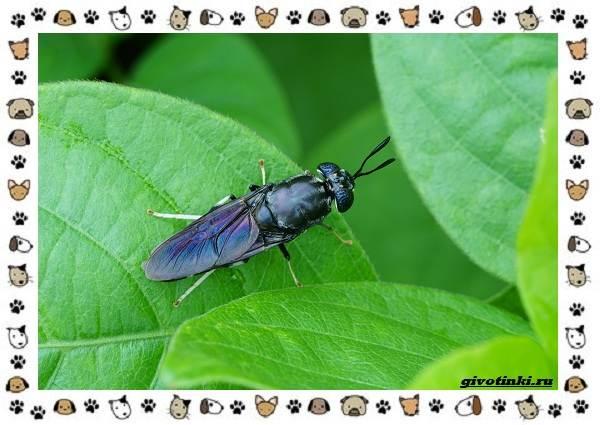 Виды-мух-о-простых-существах-в-сложных-деталях-13