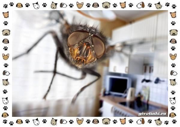 Виды-мух-о-простых-существах-в-сложных-деталях-15