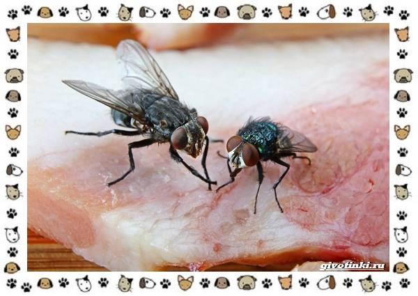 Виды-мух-о-простых-существах-в-сложных-деталях-16