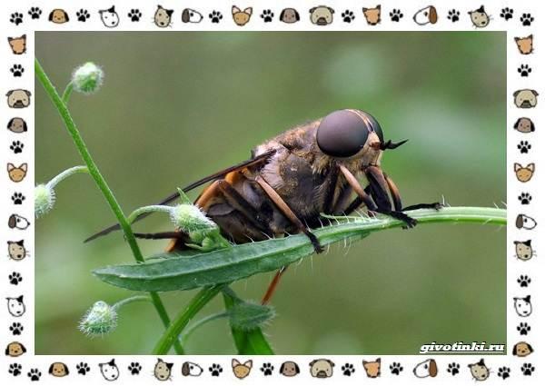 Виды-мух-о-простых-существах-в-сложных-деталях-17