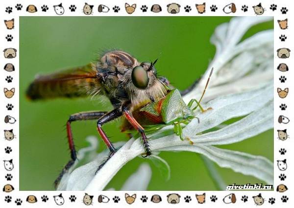 Виды-мух-о-простых-существах-в-сложных-деталях-19