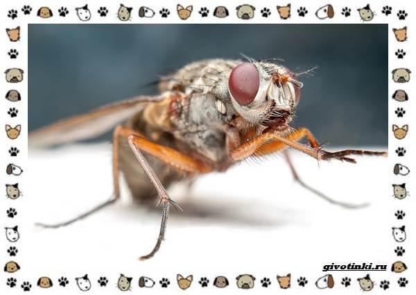 Виды-мух-о-простых-существах-в-сложных-деталях-2