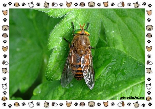 Виды-мух-о-простых-существах-в-сложных-деталях-26