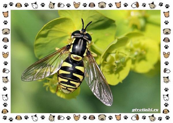 Виды-мух-о-простых-существах-в-сложных-деталях-27