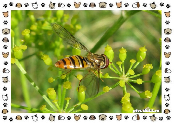 Виды-мух-о-простых-существах-в-сложных-деталях-28