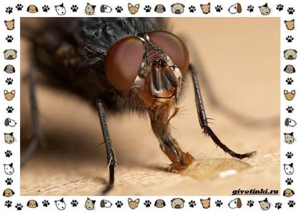 Виды-мух-о-простых-существах-в-сложных-деталях-3