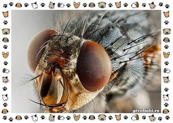Виды-мух-о-простых-существах-в-сложных-деталях-5