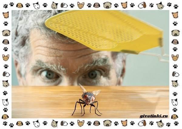 Виды-мух-о-простых-существах-в-сложных-деталях-6
