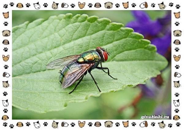 Виды-мух-о-простых-существах-в-сложных-деталях-7