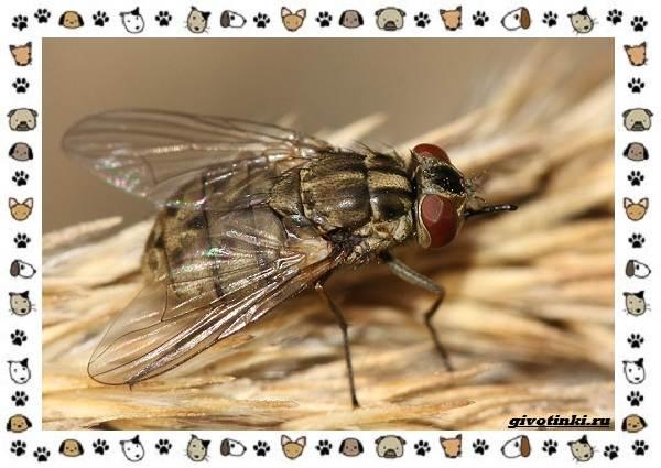 Виды-мух-о-простых-существах-в-сложных-деталях-8
