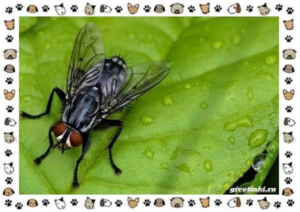 Виды-мух-о-простых-существах-в-сложных-деталях-9
